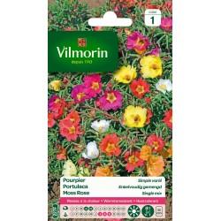Vilmorin - Pourpier Simple Varié