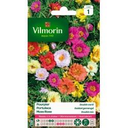 Vilmorin - Pourpier Double Varié