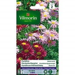 Vilmorin - Pyrethre géant varié
