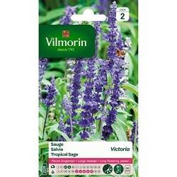 Vilmorin - Sauge Bleue