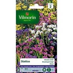 Vilmorin - Statice Sinuata Mixée
