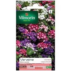 Vilmorin - Verveine Brio