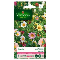 Vilmorin - Dahlia Mignon Varié