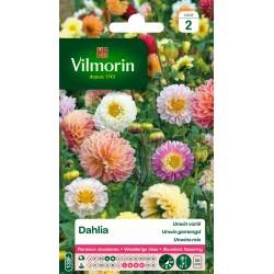Vilmorin - Dahlia Unwin varié