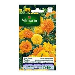 Vilmorin - Rose d'Inde Double Grande Variée