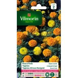 Vilmorin - Rose d'Inde naine variée