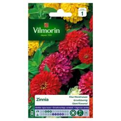 Vilmorin - Zinnia à Fleurs Monstrueuses Variées en Sachet