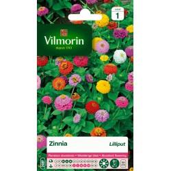 Vilmorin - Zinnia Lilliput