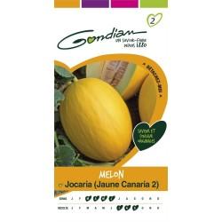 Gondian - Melon Jocaria Canaria 2 Jaune