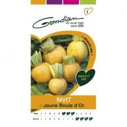 Gondian - Navet Boule d'Or Jaune