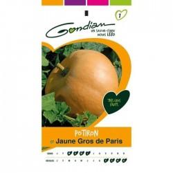 Gondian - Potiron Gros de Paris Jaune