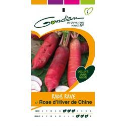 Gondian - Radis Rose Hiver Chine