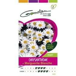 Gondian - Chrysanthème Marguerite  Blanc