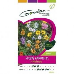 Gondian - Fleurs Annuelles Naines Multicolore