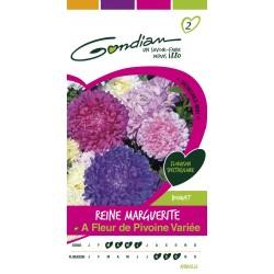 Gondian - Reine Marguerite à fleur de pivoine