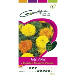 Gondian - Rose D'Inde Double Grande Variée Multicolore