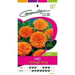 Gondian - Souci Orange King
