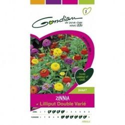 Gondian - Zinnia Lilliput Double Varié