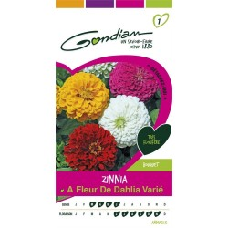 Gondian - Zinnia à Fleur de Dahlia Varie Multicolore