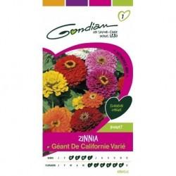 Gondian - Zinnia Géant de Californie Varié