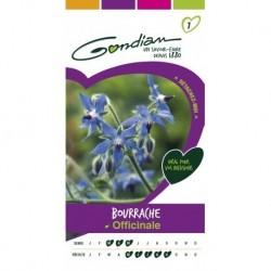 Gondian - Bourrache Officinale Bleu