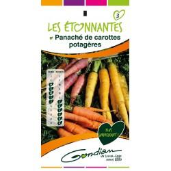Gondian - Carotte - Panaché de carottes - Les Etonnantes
