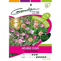 Gondian - Jachère Fleurie Ton Rose