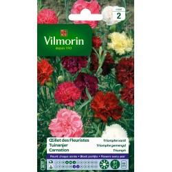 Vilmorin - Oeillet des Fleuristes, Triomphe Mix