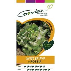 Gondian Laitue Batavia Rossia Vert - 541610